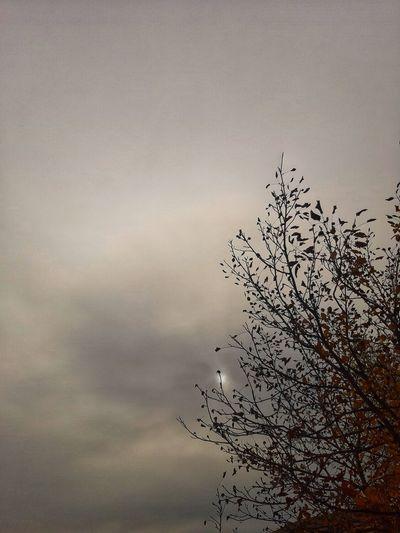 Autumn sky...