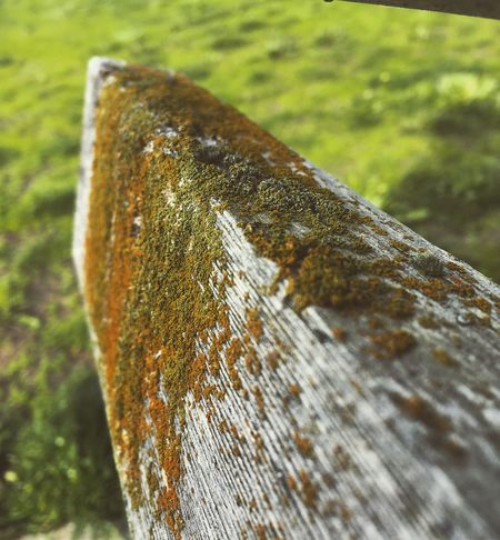 Lichens on wood Close-up Nature Outdoors Lichen Nature Photography Green