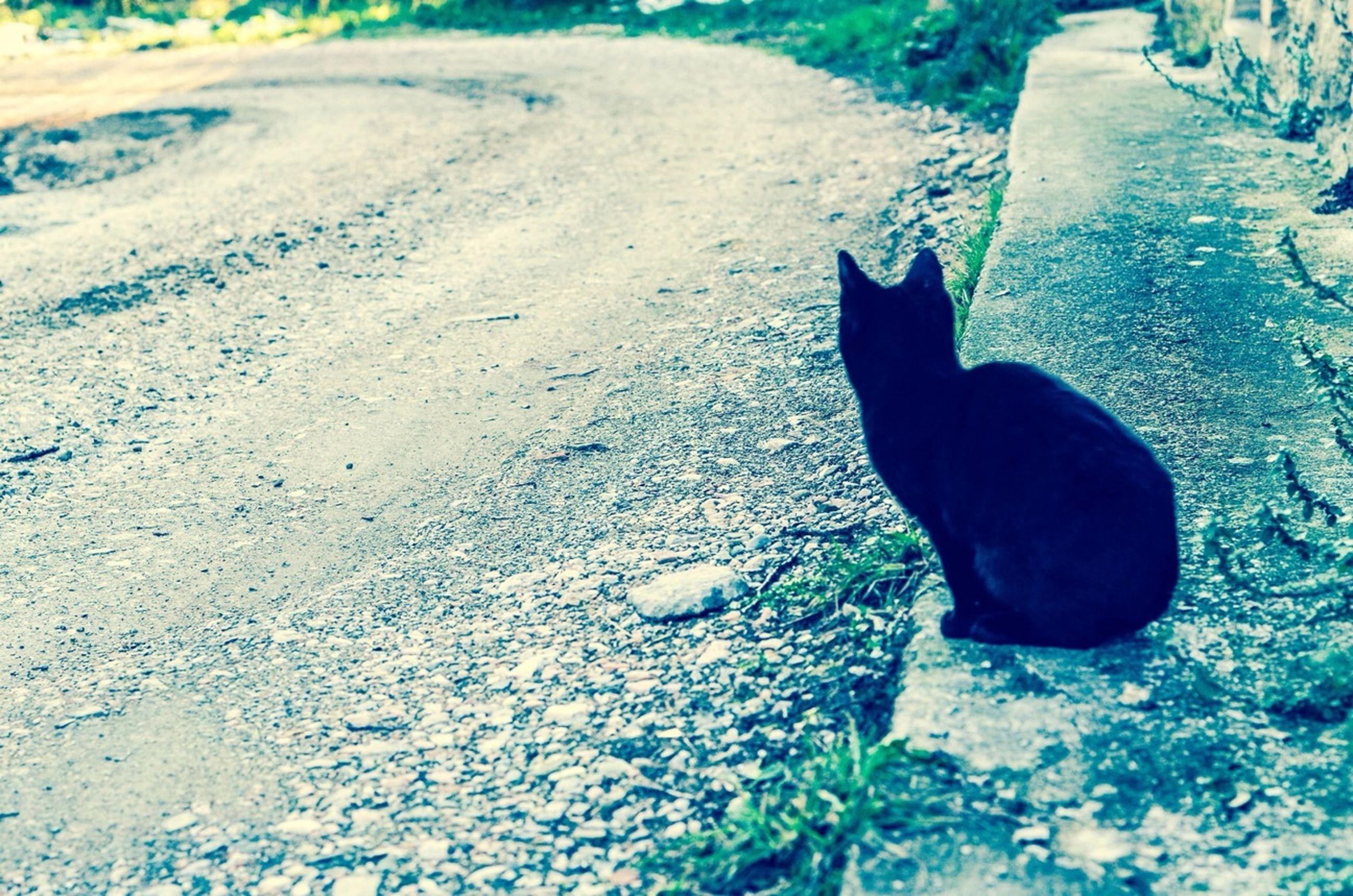 one animal, animal themes, pets, domestic animals, mammal, domestic cat, dog, cat, street, feline, high angle view, asphalt, sunlight, black color, road, stray animal, day, outdoors, sidewalk, no people