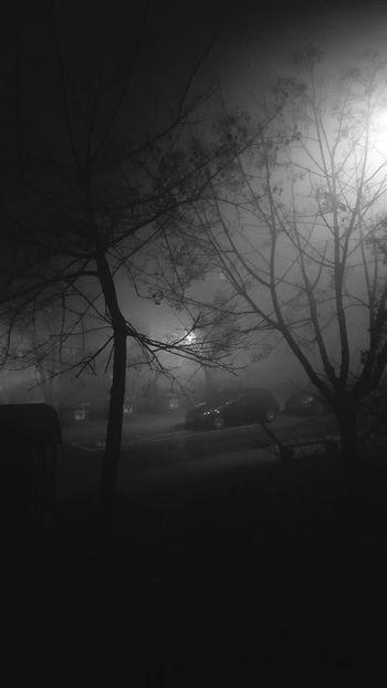 Nature Tree Fog No People Outdoors Night Sarajevo