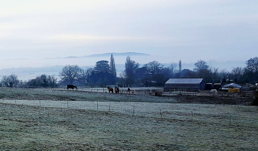 Tree Sky Cloud - Sky No People Nature Outdoors Tree House Day Foggy Morning Hills Horse Frost