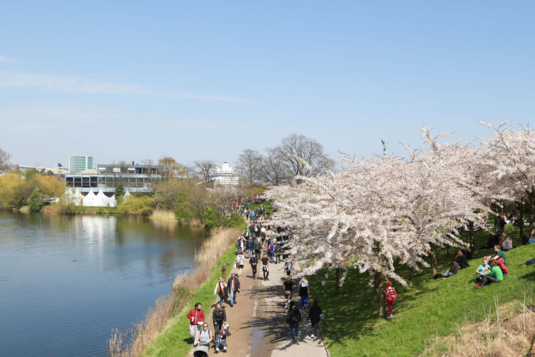 Sakura Festival Sakura Trees Spring Has Arrived Architecture Building Exterior Built Structure Cherry Blossom City Day Family Time Group Of People Growth Large Group Of People Lifestyles Men Nature Outdoors Plant Real People Sky Springtime Transportation Tree Water Women