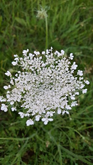 Flower Freshness Fragility Growth In Bloom Close-up Springtime White Color Nature Blossom Botany Beauty In Nature Day Branch Petal Outdoors Focus On Foreground Green Color Plant Life Flower Head