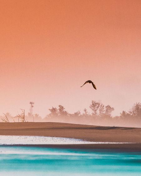 Bird flying over sea against sky during sunset