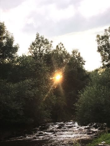 Sunset between trees on a river. Nature Sun Beauty In Nature Lens Flare Sunbeam No People Sky Scenics Water Outdoors Tranquility Tranquil Scene Sunlight Day River Tree Waterfall