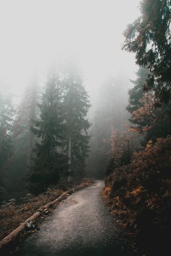 Road Day No People Flora Colors Nature Forward Movement Tree Winter Cold Temperature Fog Snow Forest Weather Sky Landscape Pine Woodland Evergreen Tree Rainy Season Rain Wet