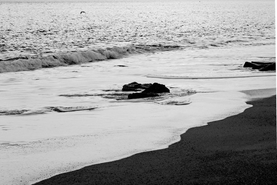 The Seagull Landscape_Collection Beach Beauty In Nature Black And White Blackandwhite Motion Nature Rock Sand Sea Seagull Tranquil Scene Tranquility Water Wave