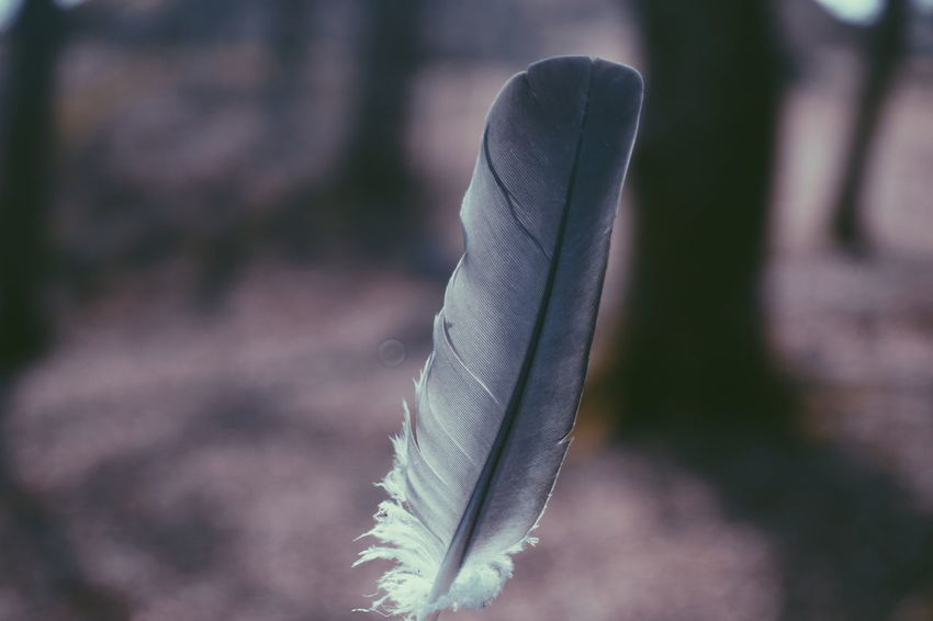 a grey bird feathet Feathers Feather_perfection Feathers Of A Bird Feather  Close-up