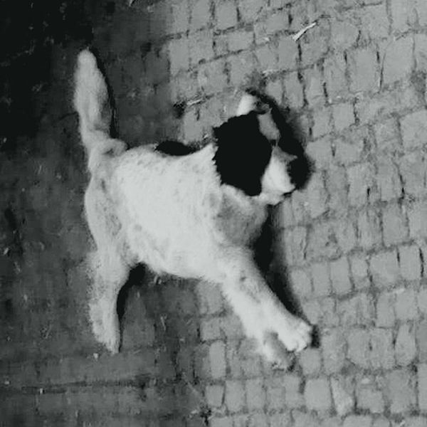 | Dog running along a wall ^^ | Dog Landseer Hunde Albern Spaß Funny Dog Silly Silly Me Monochrome Monochromatic Monochrome_life Monochrom Bnw Bnw_society Bnw_worldwide Bnw_switzerland Blackandwhitephotography Blackandwhite Blancoynegro Animals Pets Domestic Animals Enjoying Life Eyem Best Shots - Black + White Kunst