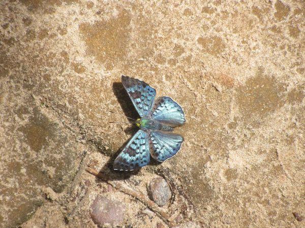 Borboletas Do Brasil Borboletas Butterfly Butterfly Collection Butterfly Encounter Butterfly World Butterflys