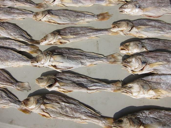 Full frame shot of dried fish