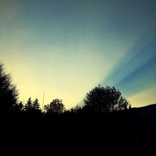 Sunset Sunbeam Trees