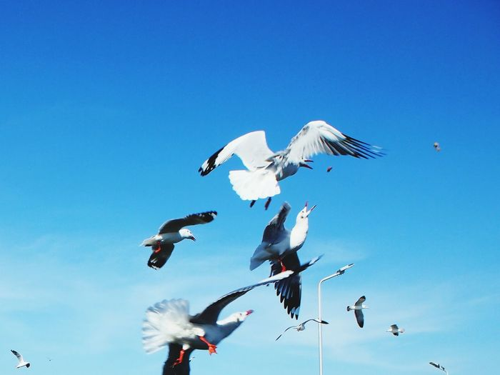 The gulls tried to reiceive cracklings, It was thrown by human – for feeding a seabirds. Flying Blue Sky Blurred Motion Seabirds Thrown Away Feeding The Birds Seagull Mid-air Photography Zoom In