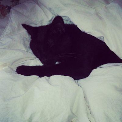 Sleeeeeepy baby Lazycatdaze Bagheerah Catsofinstagram Caturday