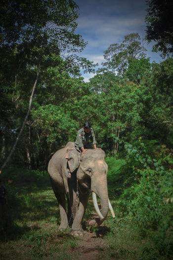 Man sitting on elephant in forest