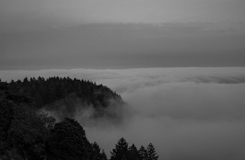 Edge of the world Scenics Tranquil Scene Tranquility Beauty In Nature Tree Mountain Idyllic Fog Nature Cloud - Sky Majestic Atmosphere Growth Non-urban Scene Atmospheric Mood Sky Day Foggy WoodLand Remote