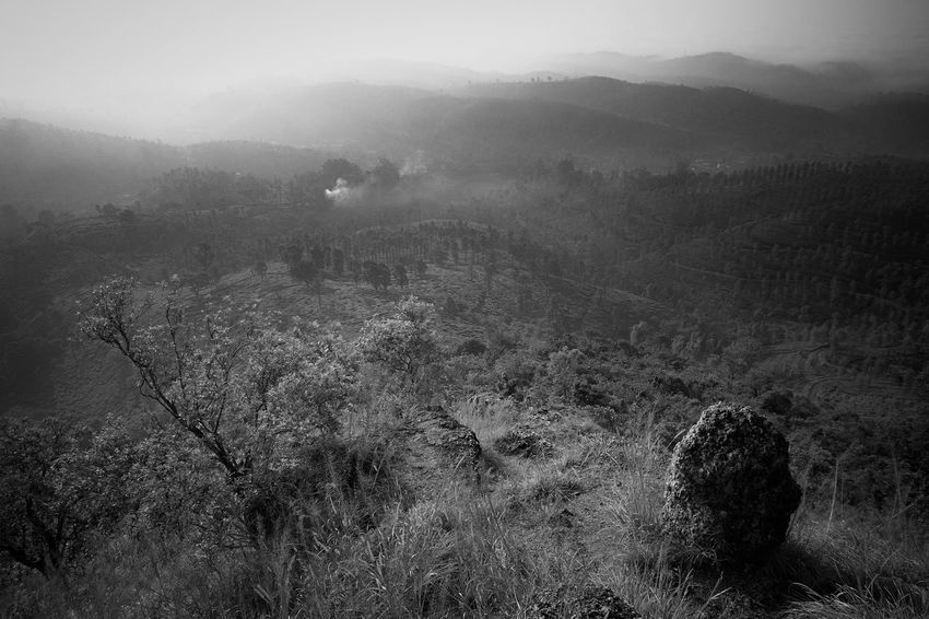 Rural India India Kerala Wayanad South India Blackandwhite Plant Tranquil Scene Landscape Environment Fog Scenics - Nature Tranquility Beauty In Nature Nature No People Non-urban Scene Land Mountain High Angle View Outdoors Hazy  Morning
