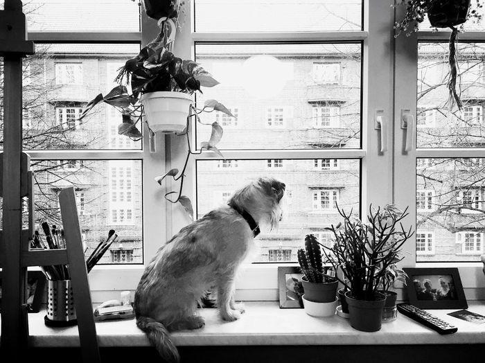 lotte's watchin' you Dog First Eyeem Photo