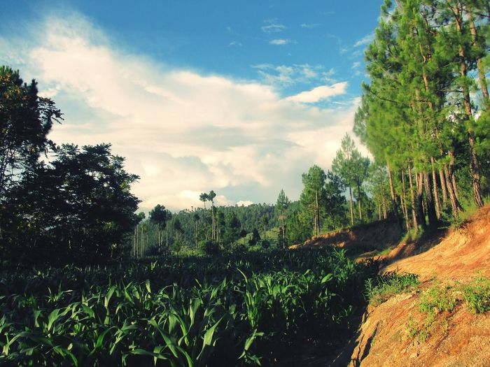 Where the sun shines upon Environmental Conservation Growth Rural Life Agriculture Photography Trees And Crops