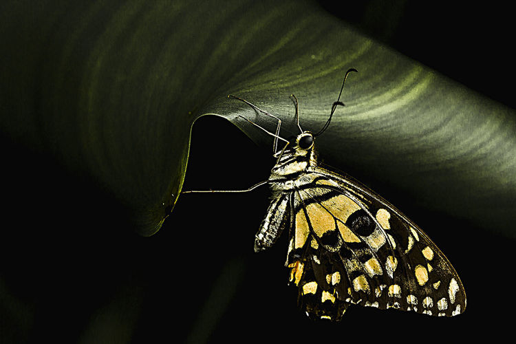 Animal Themes Animal Wildlife Animal Wing Animals In The Wild Beauty In Nature Butterfly Butterfly - Insect Close-up Day Fragility Insect Leaf Nature No People One Animal Outdoors Perching Spread Wings Wildlife