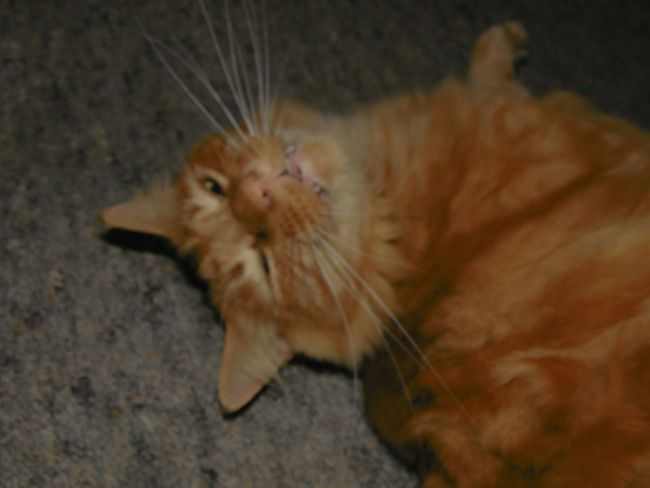 Pets Cute Whiskers Relaxing Taking Photos Hi! Check This Out Enjoying Life Hanging Out Hello World