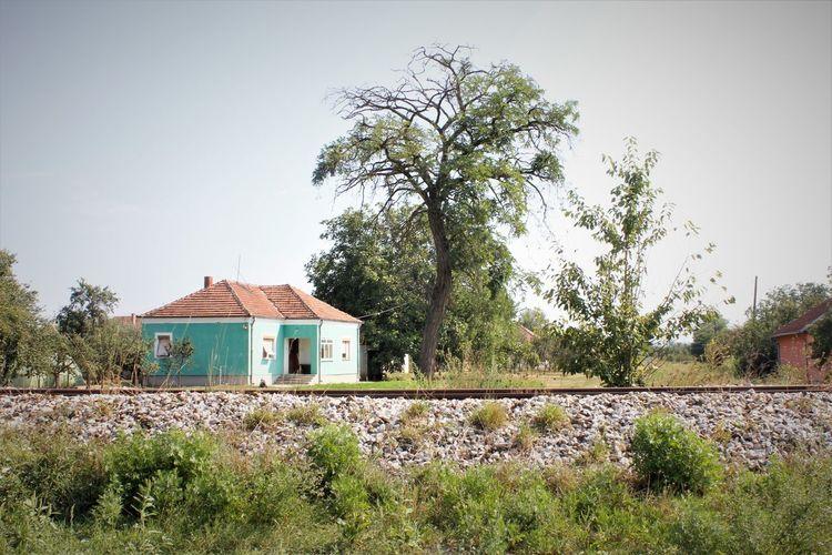 Green house...