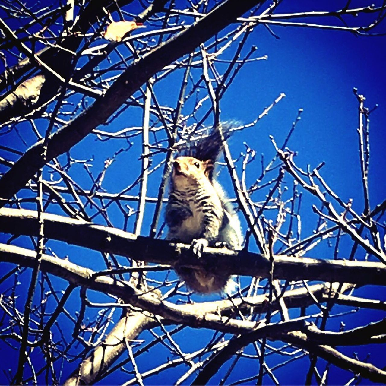 one animal, branch, animal themes, blue, low angle view, day, tree, no people, animals in the wild, outdoors, nature, mammal, sky, beauty in nature