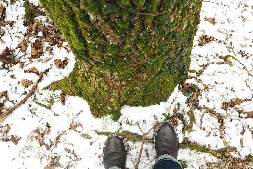 Tree Moss Green Ivy Snow Shoe Personal Perspective Human Body Part Tree Nature Wood Forrest Outdoors Human Foot Vscocam VSCO