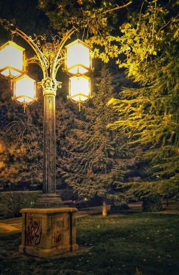 Night is light Nightphotography Green Yellow Lamppost Leafs