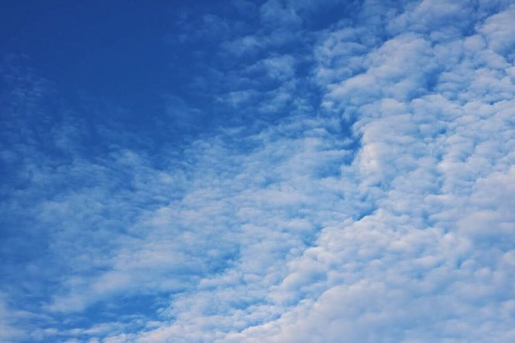 Blue sky with clouds Cloud - Sky Beauty In Nature Nature Fluffy Blue Sky Backgrounds Softness White Color Sky Only Tranquility Cloudscape No People Scenics Low Angle View Day Full Frame Outdoors Dramatic Sky Cloudscape Tranquility Tranquil Scene The Purist (no Edit, No Filter) VSCO Singapore