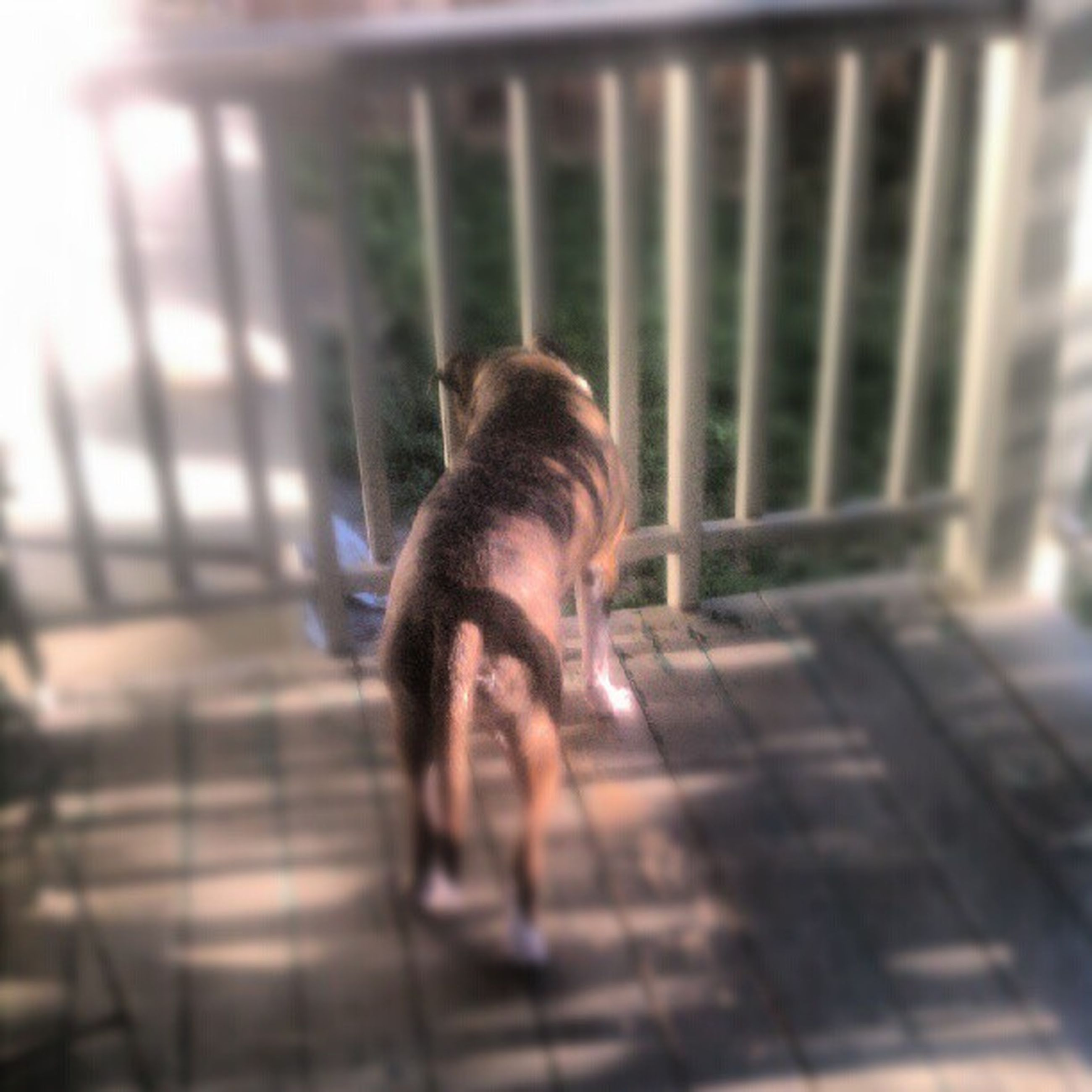 one animal, pets, mammal, full length, animal themes, domestic animals, dog, indoors, lifestyles, rear view, side view, leisure activity, railing, sitting, focus on foreground, selective focus, day, sunlight
