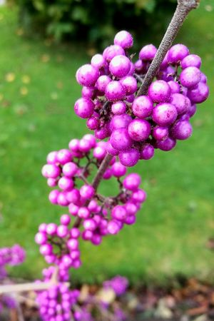 Purple Nature Plant Flower Growth Pink Color Outdoors No People Beauty In Nature Close-up Day Vine - Plant Fragility Freshness Perspectives On Nature