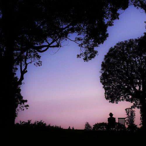 Sky_collection Silhouette Schattenspiel  TreePorn