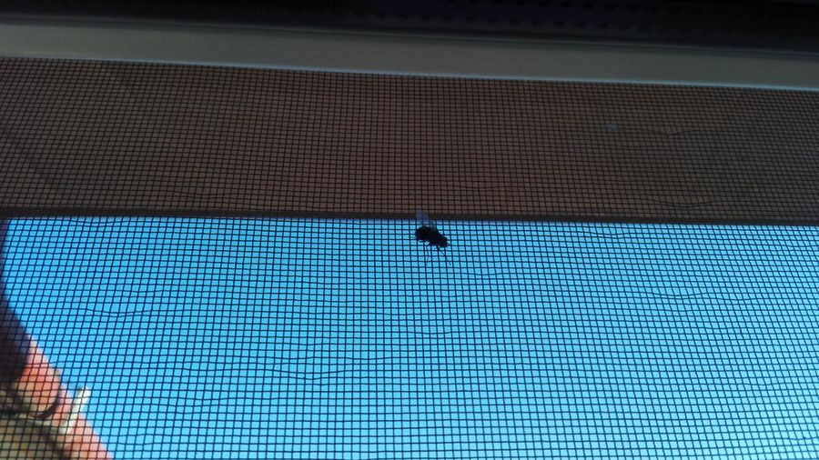 Fly Homefly Home Fly Critter Insect Blue Sky Window Net Fly On Window Net Homefly On Window Net Uppon Blue Sky Blue Pattern Day Indoors  No People