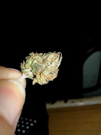 Un mini cogiiiii ♥ Cogollo Smoking Weed Enjoying Life