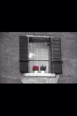 Flower Window Colors