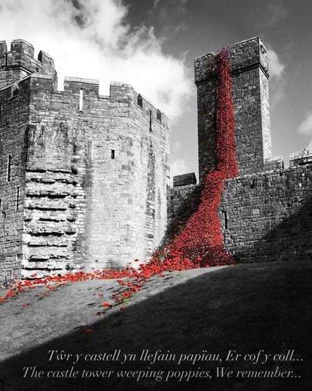 Weeping Popies Caernarfon Castle Remembrance First Eyeem Photo