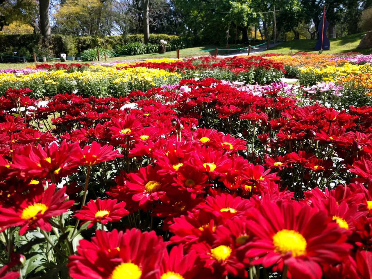 CLOSE-UP OF COLORFUL FLOWERS IN PARK