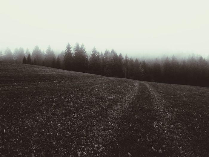 Moutains Tree Wood Landscape