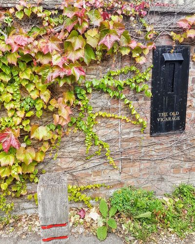 Stone Wall Letterbox Ivy Leaves Ivy Vicarage Granchester Close-up