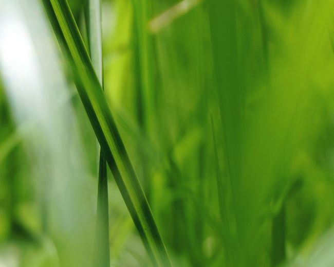 Green Color Nature Plant Grass Growth Close-up No People Outdoors Beauty In Nature Leaf Backgrounds Day The Week On Eyem