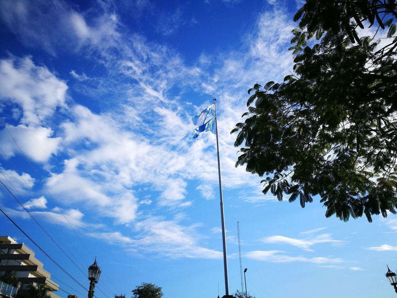 sky, cloud - sky, low angle view, tree, plant, no people, nature, flag, day, blue, lighting equipment, outdoors, growth, patriotism, beauty in nature, pole, tranquility, connection, electricity, tall - high, wispy