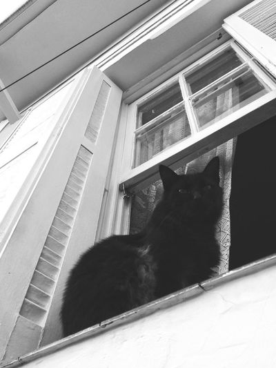 No People Built Structure Architecture Day Cats Of EyeEm Windows Catsinwindows One Animal Animal Themes Low Angle View