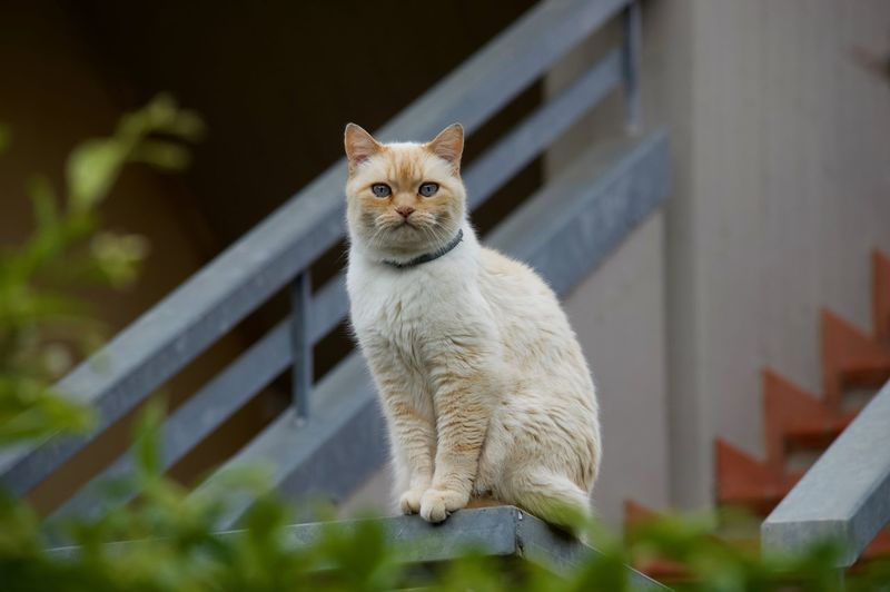 Mammal One Animal Cat Pets Domestic Feline Domestic Cat Domestic Animals Persian Cat  Day