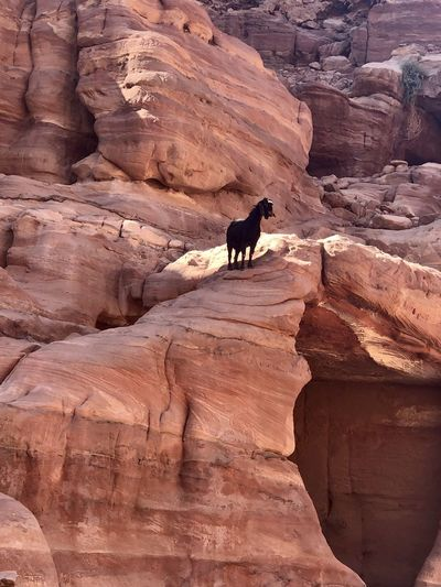View of goat on rock formation