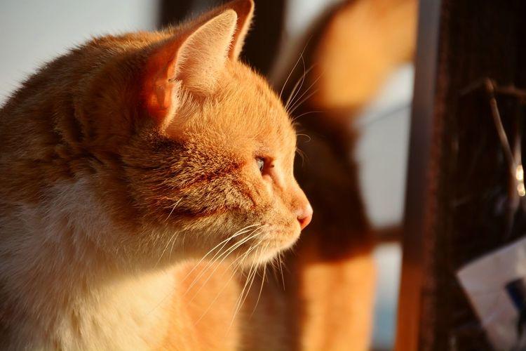 Hello World Cat♡ Catcatcat Bestfriend