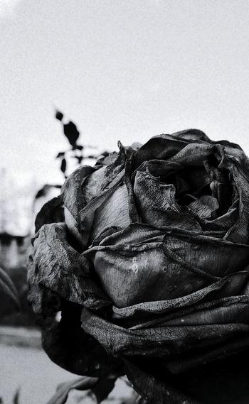 モノクロ Black And White Photography Iphonegraphy Vscocam Flower