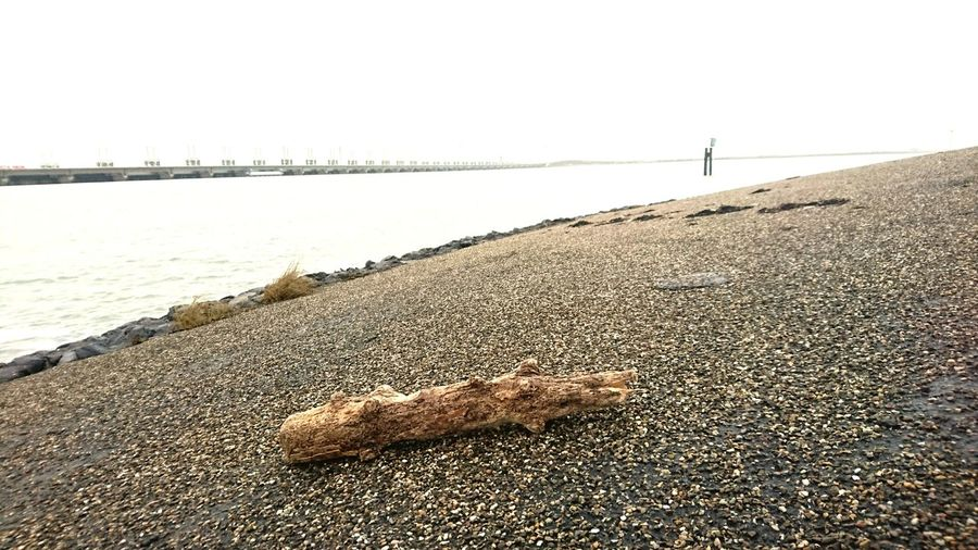Driftwood Nomadism Zeeland  Oosterschelde Deltawerken Farmland Zeeland❤️ Travel Beach Sea Water Sand Day Outdoors Tranquility No People Beauty In Nature Low Tide