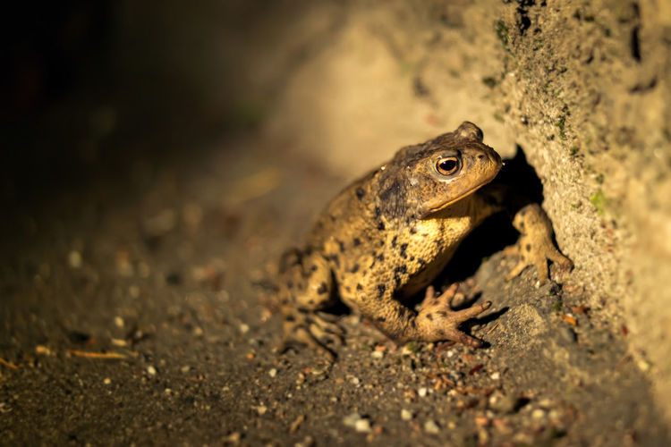 Close-up Dirty Focus On Foreground Frog Nature Night No People One Animal Rough Toad Wildlife