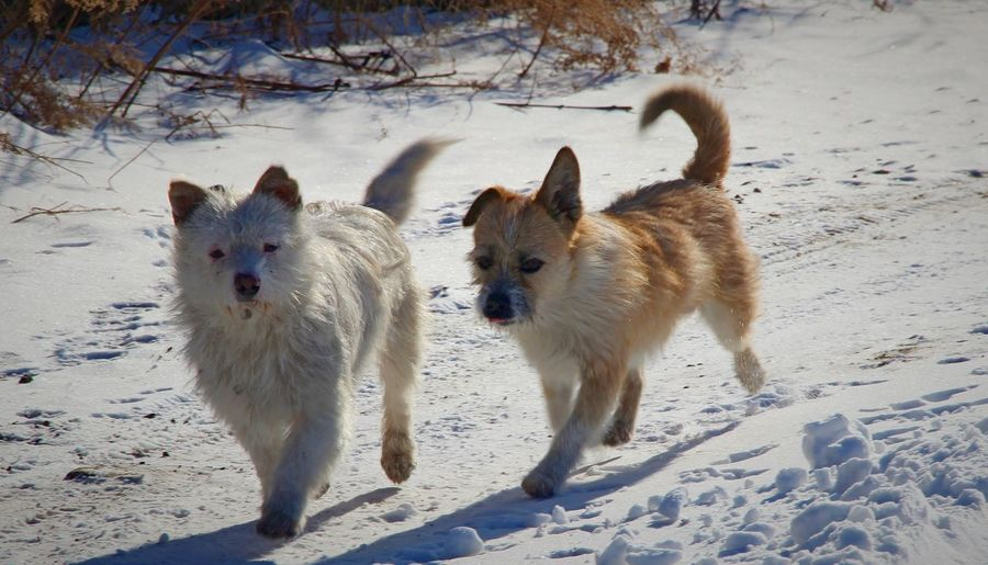 Dogs on snow field during winter